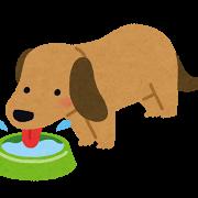 dog_pet_water